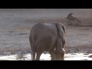 This adorable baby elephant didn''t want to finish bath time.