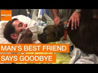 Dog''s Final Goodbye at Owner''s Hospital Bedside