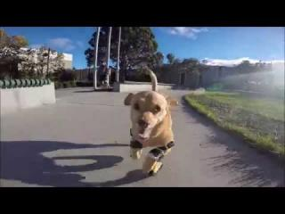 Disabled Dog, Daisy Learned How To Run In Prosthetic Legs