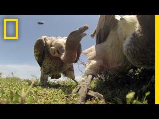 POV: If Vultures Ate You, Here's What You'd See | National Geographic