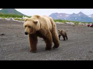 Reactions to CLOSE BROWN BEAR encounter